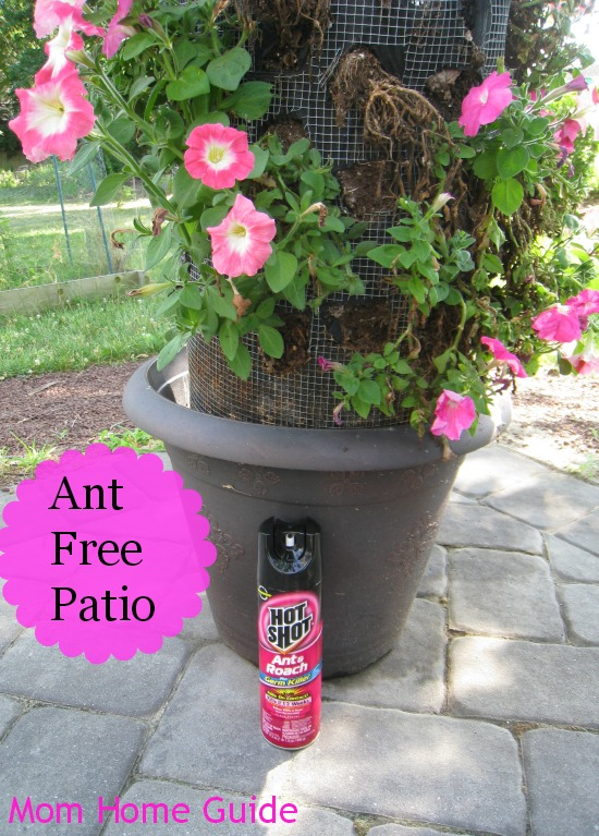 hot shot, insecticide, paver, patio, flower, container