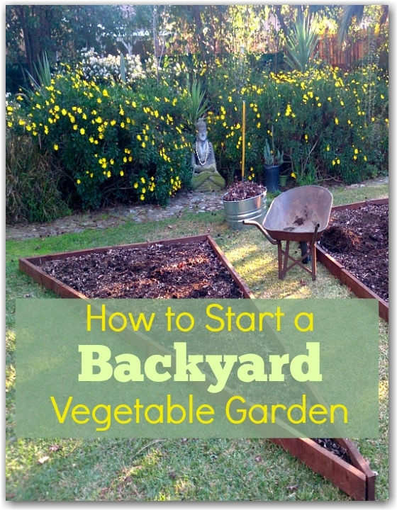 how to start a backyard raised garden