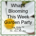 garden party button