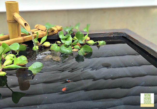 Goldfish in aquasscape patio pond