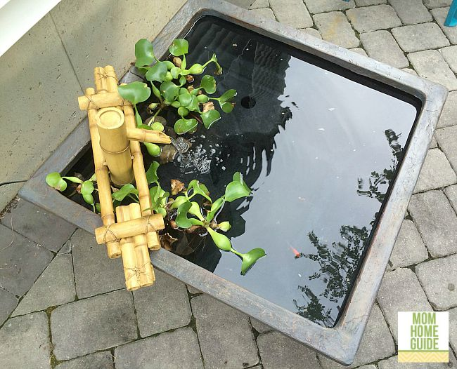 Giveaway of Aquascape Patio Pond