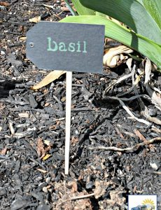 I love the look of this DIY basil herb garden marker