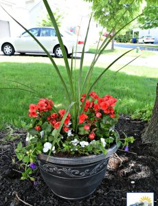 A shade planter garden with tall spike grass, begonias, violets and impatiens