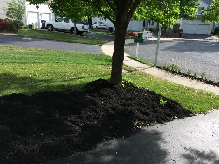 front yard landscape area