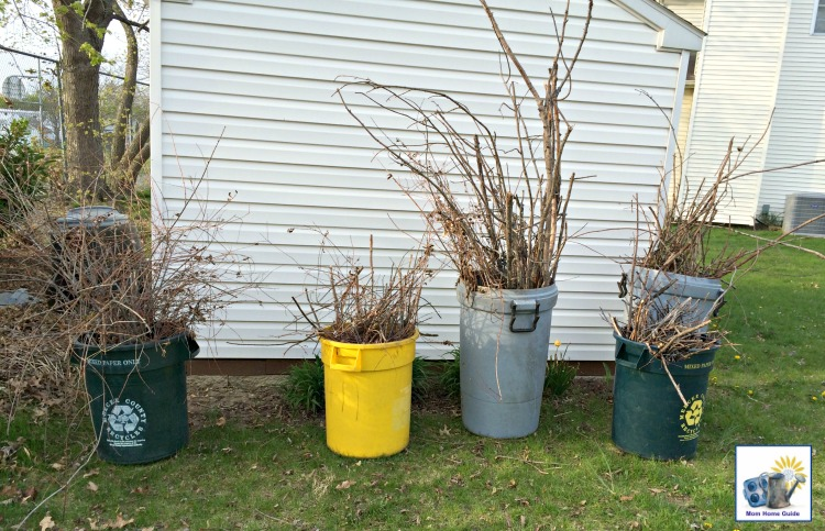 In May, I cleared out all the fallen twigs -- years' worth -- from my backyard