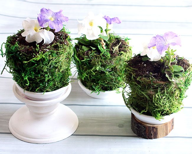 Moss pots by Curly Crafty Mom