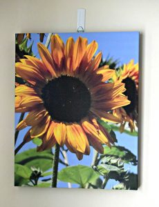 custom sunflower print made with Canvas Factory
