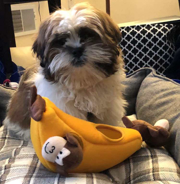 Zippy Burrow Monkey 'n Banana puppy toy