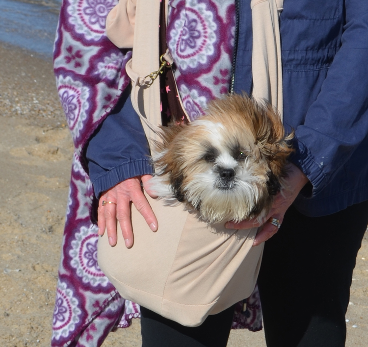 Shih Tzu puppy in FurryFido adjustable and reversible pet sling