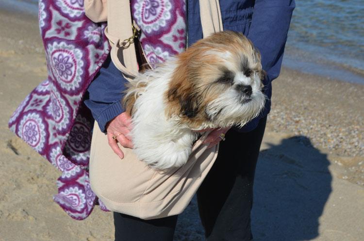 Shih Tzu in a coffee Furry Fido pet sling