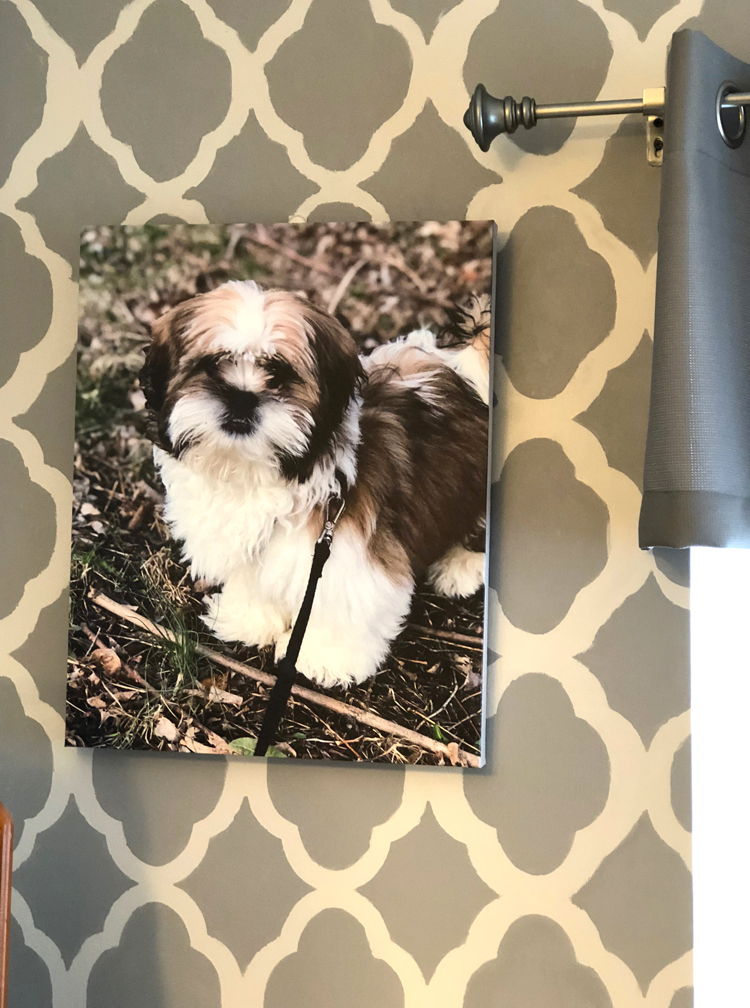 cute canvas print of a puppy made reasonably with Canvas Factory