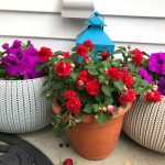 Friday Five – A Sweet Mother's Day, a Patio Pond & New Gear for the Grill