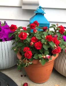 front porch flowers