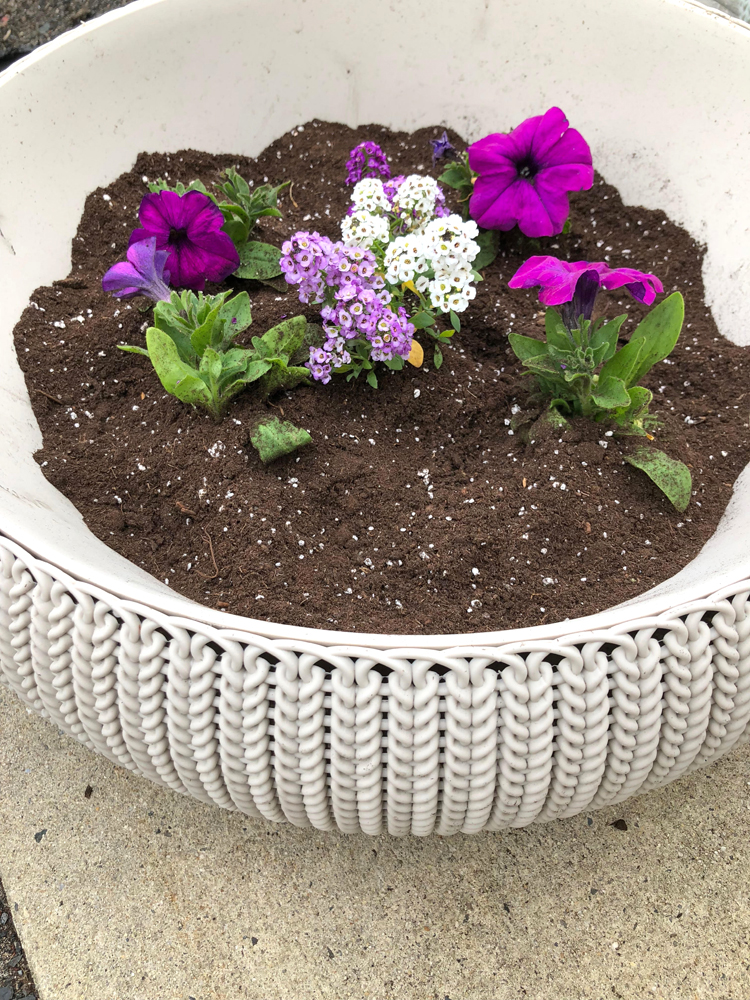 Keter resin planters planted with petunia and alyssum flowers