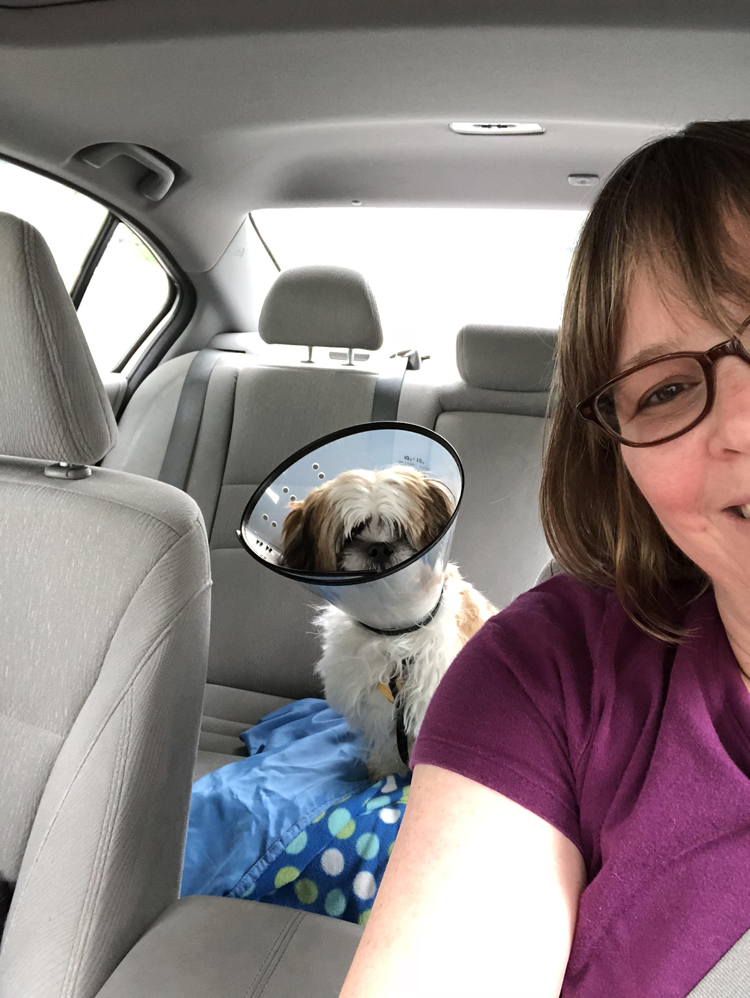 puppy in a backseat of a car with a protective post surgery collar