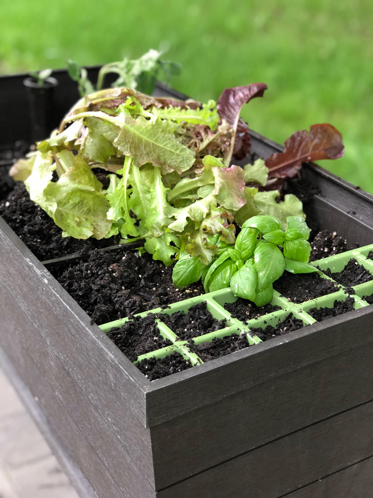 The Keter Urban Bloomer has a seed starting tray for starting seeds for your planter