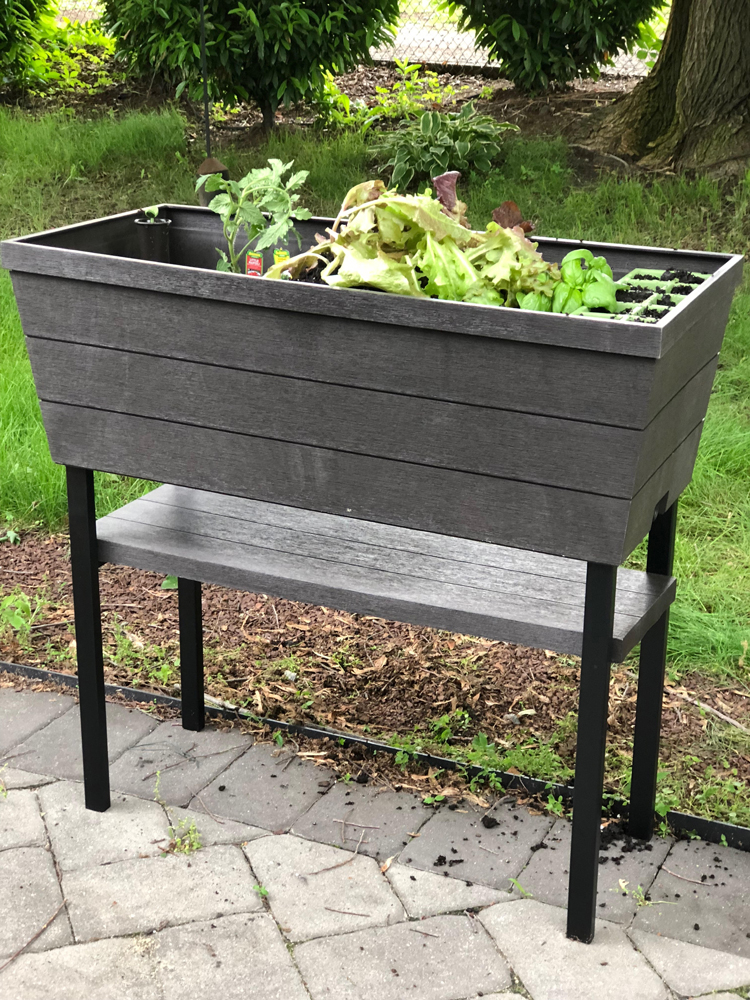vegetables growing in a raised patio planter