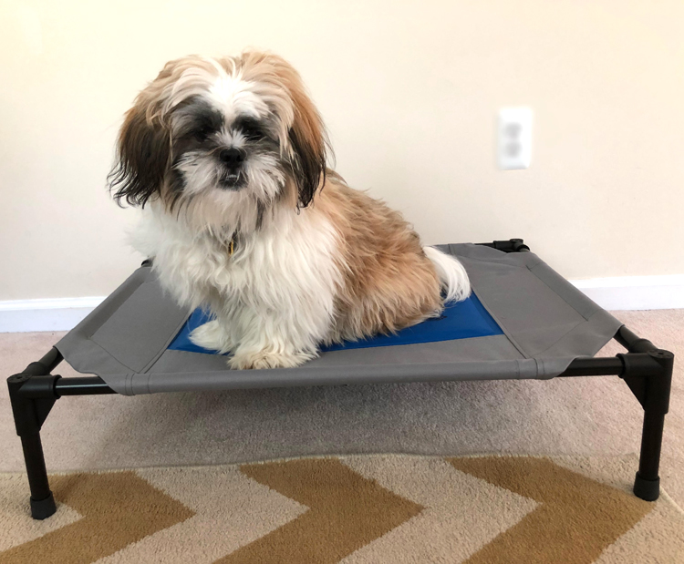 shih tzu puppy on a coolin pet cot