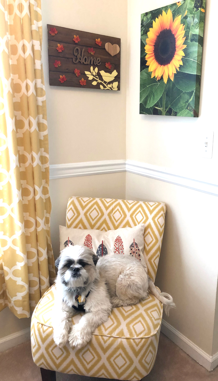 A Shih Tzu puppy sitting in a colorful living room on an accent chair beneath a sunflower canvas photo print.