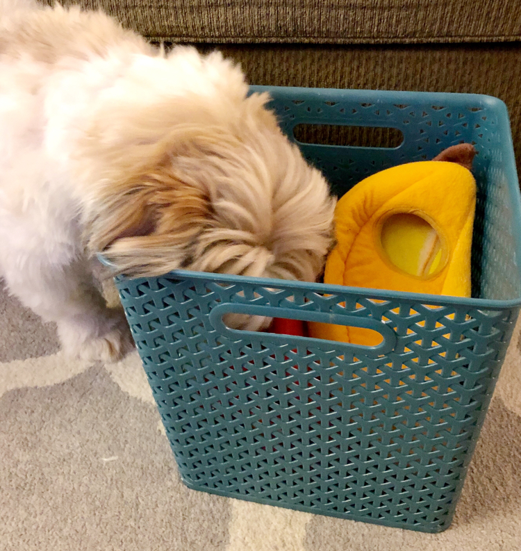 A puppy getting toys out of a plastic storage bin