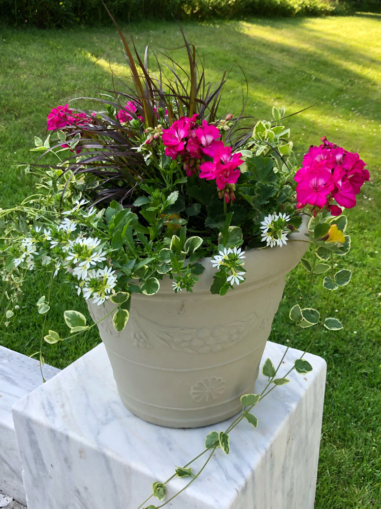 Beautiful potted flowers in Yaddo Gardens in Saratoga, NY
