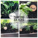 Summer Raised Herb Garden — Pinterest Challenge  Blog Hop