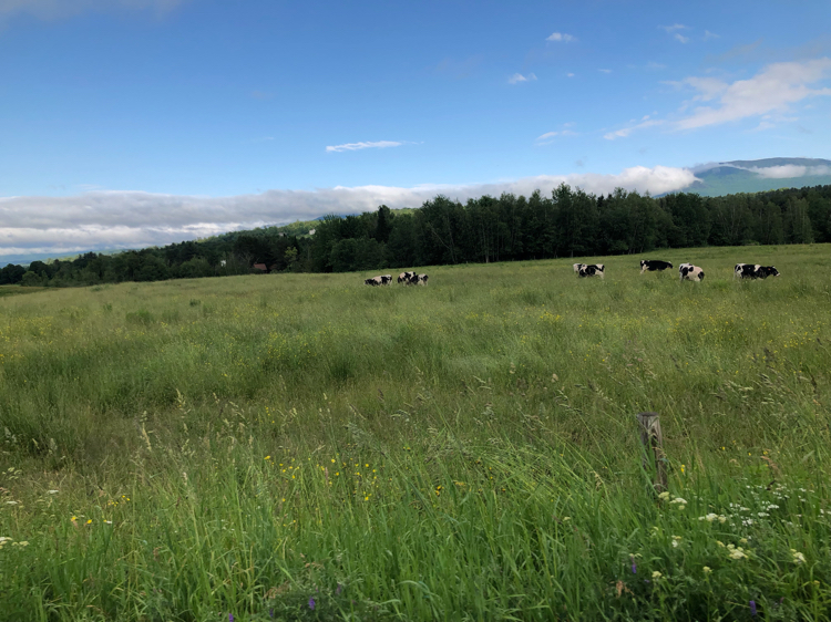 The area of Stowe Vermont features mountains, beautiful sky and plenty of breathtaking farmland.