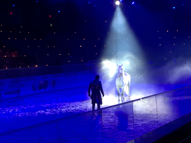 Magnificent trained horses are part of the show at the Medieval Times