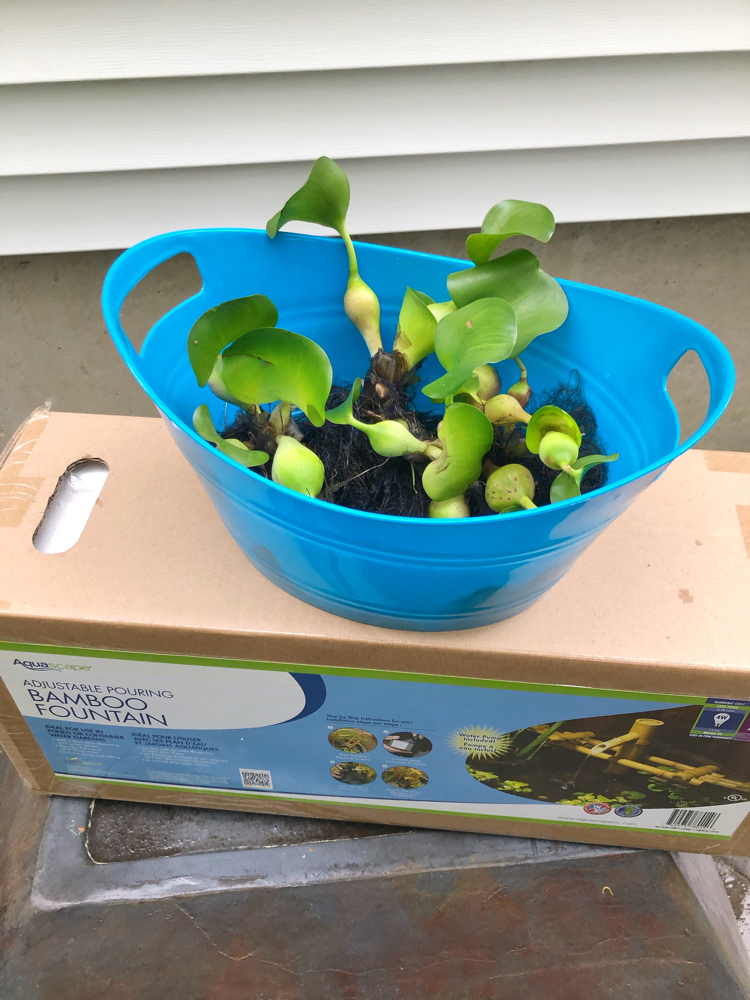 A patio pond fountain in a box with a plastic container of water hyacinths sitting on top. The box is sitting on an upside down patio pond.