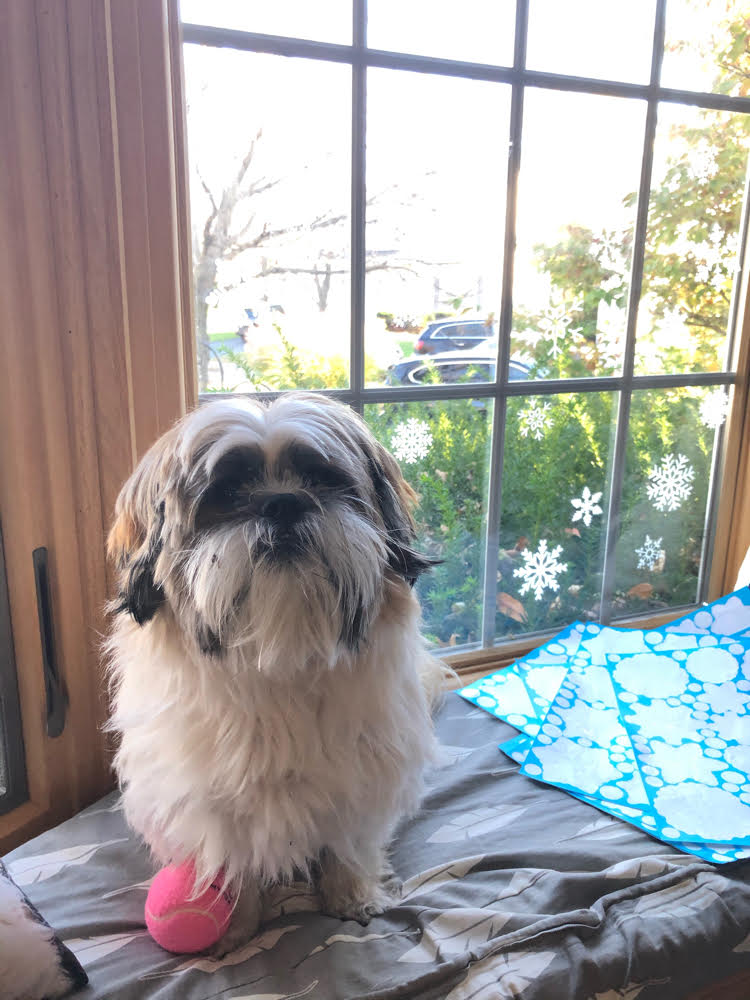 Shih Tzu sitting on a window seat cushion in front of a bay window decorated with snowflake decals