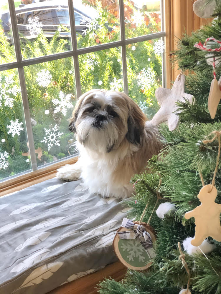 Shih Tzu sitting in a window seat by a window decorated with snowflake window decals