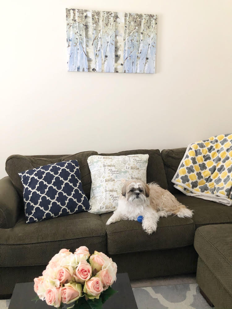 A Shih Tzu pup on a green sectional sofa below a canvas print of birch trees by Lisa Audit