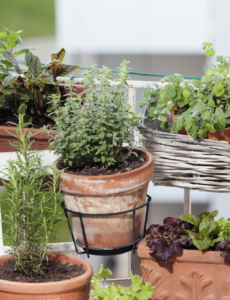 potted herbs in terra cotta pots on a balcony
