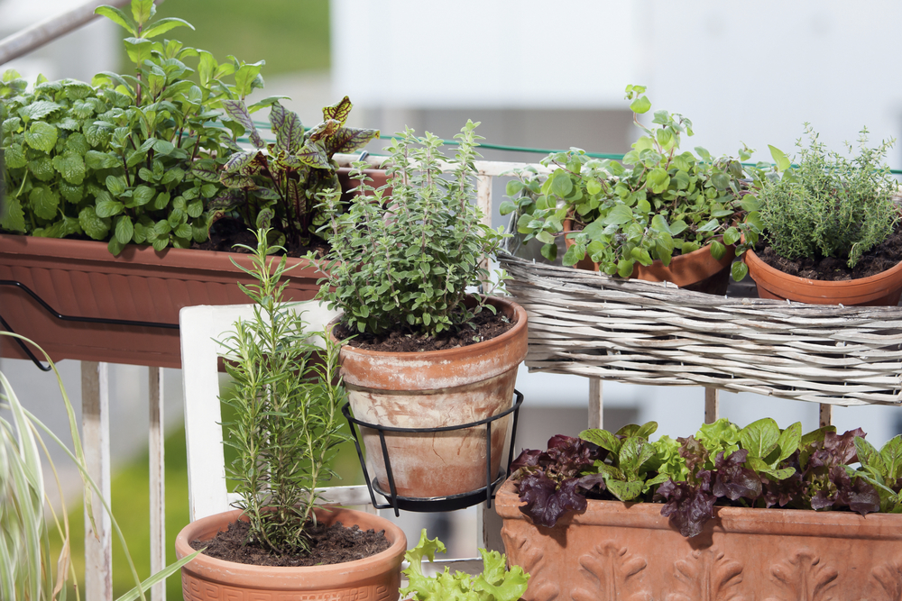 Even a small balcony is enough space for a small vegetable or herb garden.