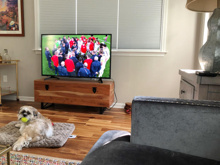 dog in front of a TV in a living room with a sectional sofa and a wood floor