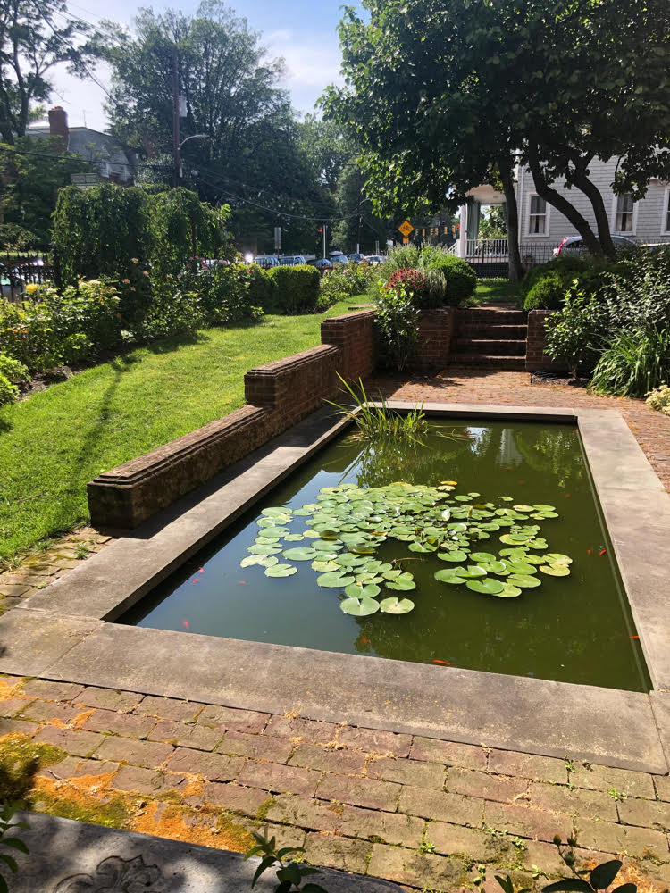 beautiful backyard pond with lily pads in Annapolis, Maryland